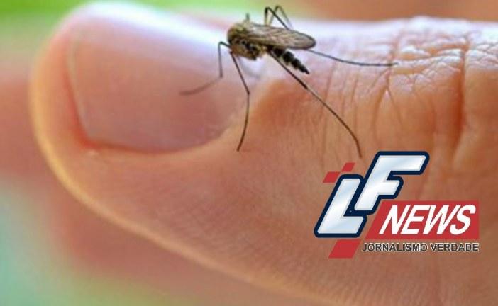 Mosquito comum que circula não transmite zika, aponta Fiocruz