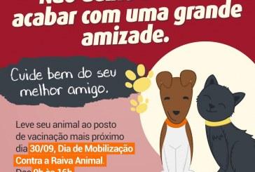 Campanha de vacinação antirrábica imuniza cães e gatos em Lauro de Freitas