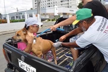 Campanha de vacinação antirrábica segue até o dia 14 em Lauro de Freitas