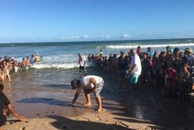 Univerão: filhotes de tartarugas são soltas na Praia de Vilas